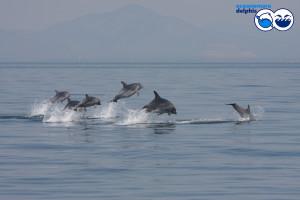 delfinibottlenose